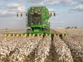 Cotton-harvester at work.jpg
