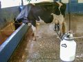 Cow milking machine.jpg