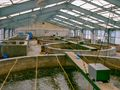 Shrimp hatchery.jpg