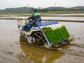 Rice planting machine.jpg
